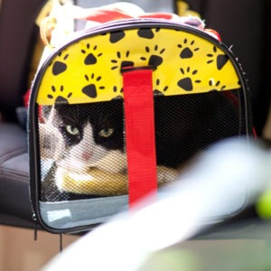 Black and white cat inside of yellow cat carrier.