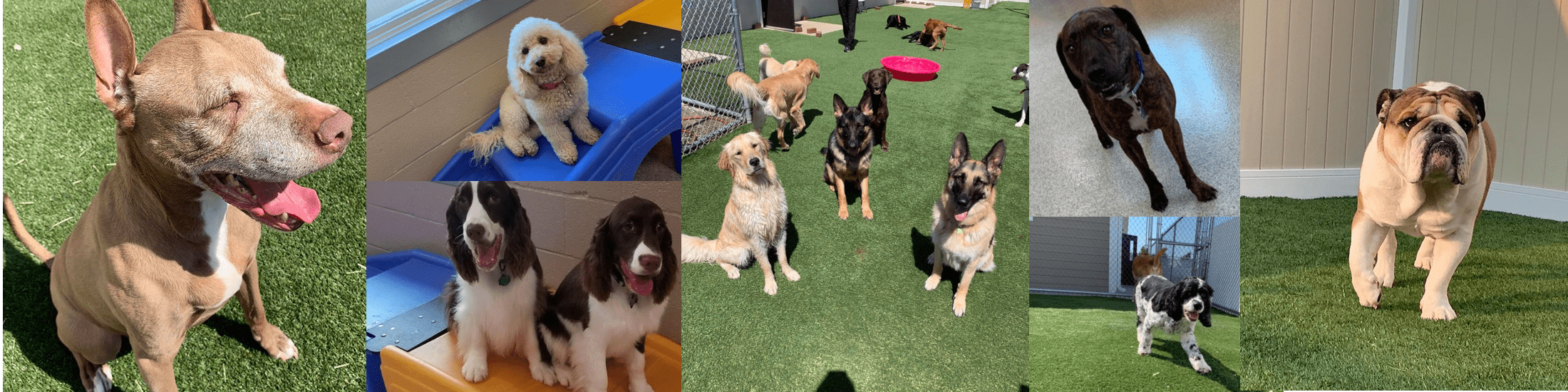 Collage of several dogs at the daycare and training at Bark District.