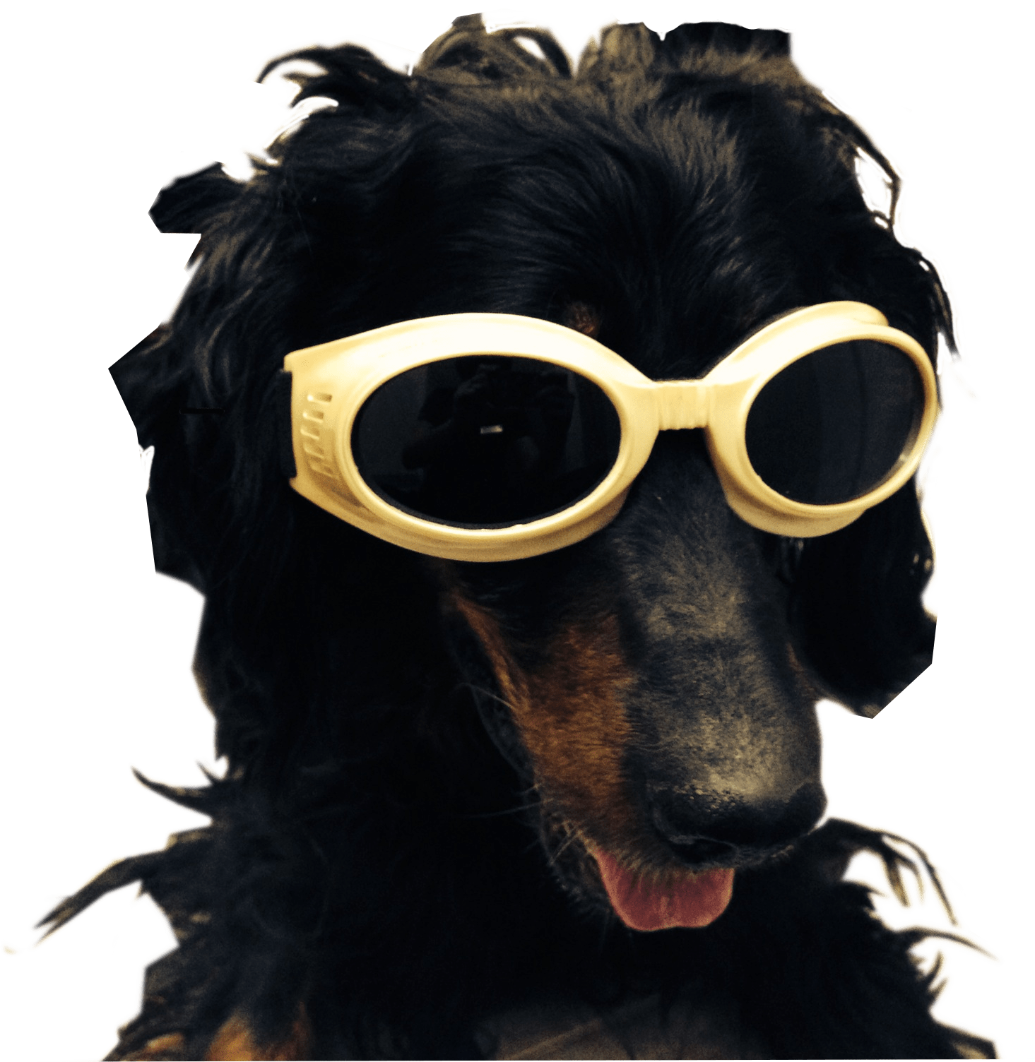 Black dog with tongue sticking out with yellow goggles.