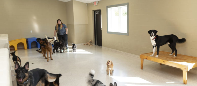 Several dogs at daycare center with staff member in Bark District.