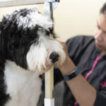 Black and white dog being groomed by staff at Bark District.