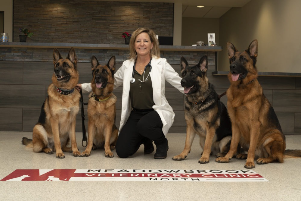 Annette Gutzwiller, DVM on clinic floor with four German Shepherds.